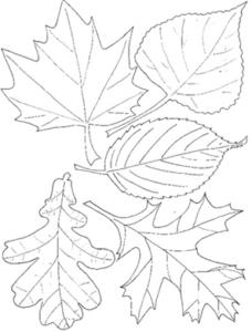 Vijf getekende hersftbladeren om als sjabloon te gebruiken